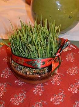 Wheat of Santa Barbara